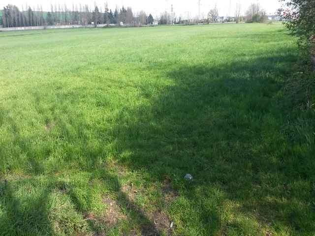 terreno dalmine vendita agricolo
