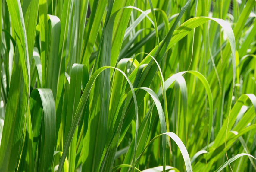terreno agricolo mozzo borghetto vendita prato pianeggiante