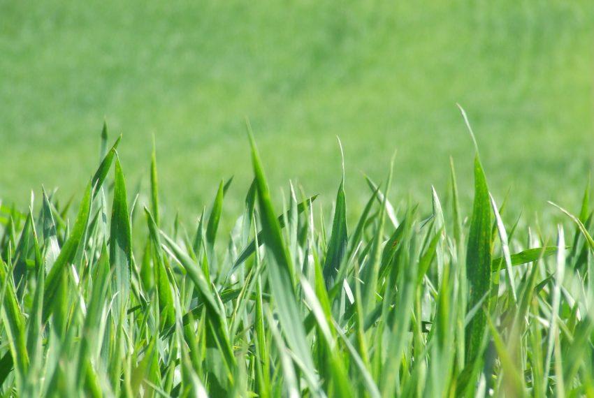 terreno agricolo vendita mozzo borghetto bergamo prato collinare pregio